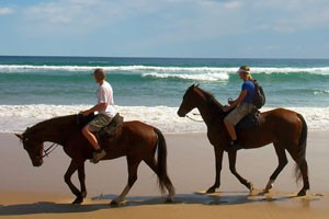 Enjoy Horse Back Riding