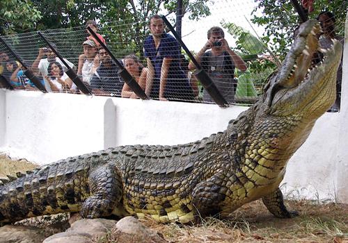 boulderbay_area_attractions_crocodile_creek