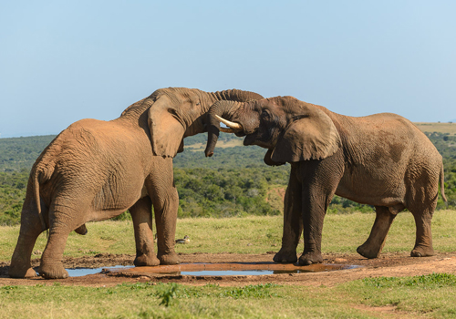 royal_wharf_area_attractions_addo_elephant_park