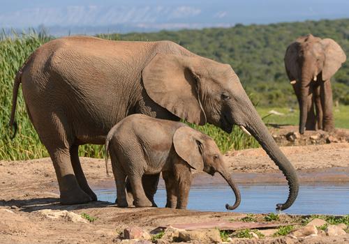 sunshine_bay_area_attractions_addo_elephant_park