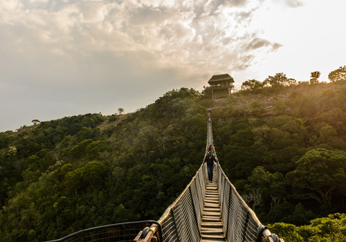 the_aloes_area_attraction_lake_eland_suspension_bridge